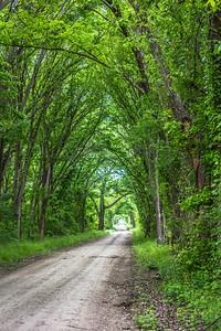 DSR_20150421Ennis Bluebonnet Trail89