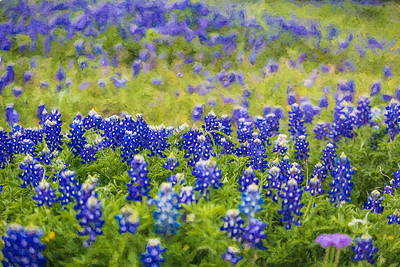 DSR_20150421Ennis Bluebonnet Trail82-Edit
