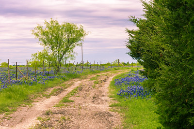 DSR_20150421Ennis Bluebonnet Trail128-Edit