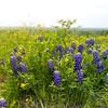 DSR_20130416Ennis Bluebonnets61