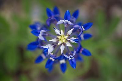 DSR_20150421Ennis Bluebonnet Trail151
