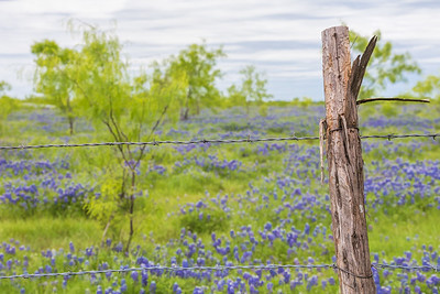 DSR_20150421Ennis Bluebonnet Trail125-Edit