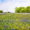 DSR_20130416Ennis Bluebonnets205-Edit