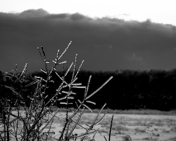 After the Ice Storm B+W - PEC, Canada