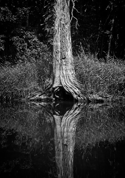 Time to Reflect - Muskoka, Canada