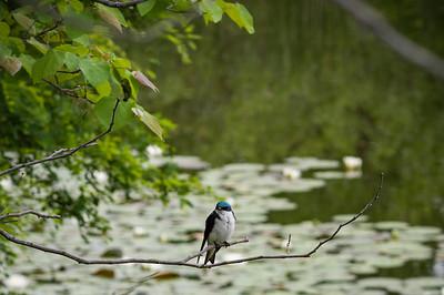 Brickworks Bird - Toronto, Canada