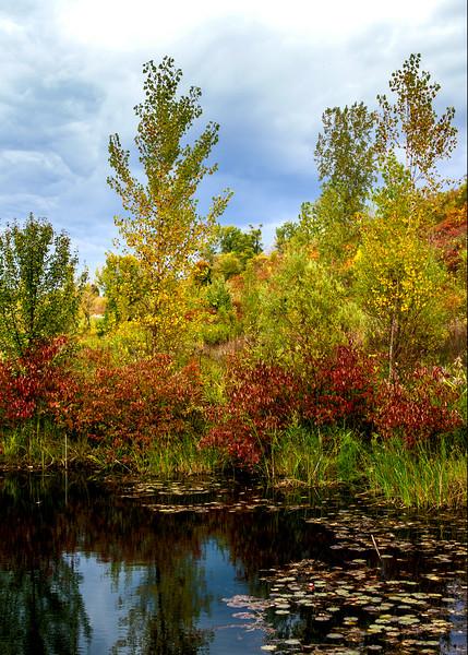 Small Pond - Toronto, Canada