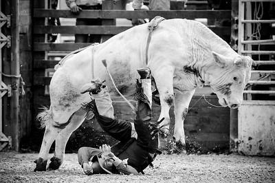"""Festival Equiblues - Edition 2008 Festival Western """"equiblues"""" à Saint-Agrève dans l'ardèche. Réunion des passionnés d'équitation western et country music. Spectacles le soir et groupe américain et australien. Festival d'équitation de travail et épreuvs de RODEO à cheval et sur taureaux (broncos et bull rider)  © Christophe Bricot   © Christophe Bricot  www.bricotchristophe.comFestival Equiblues - Edition 2008 Festival Western """"equiblues"""" à Saint-Agrève dans l'ardèche. Réunion des passionnés d'équitation western et country music. Spectacles le soir et groupe américain et australien. Festival d'équitation de travail et épreuvs de RODEO à cheval et sur taureaux (broncos et bull rider)  © Christophe Bricot   © Christophe Bricot  www.bricotchristophe.com"""