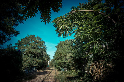 "France, Paris : the ""Petite Ceinture"", during the walk along the old railway lines inside Paris  in August 13th , 2016, in Paris, France - Photo Christophe Bricot."