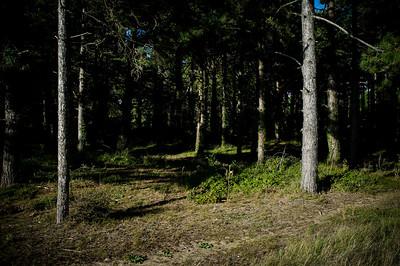Ile de Ré, Ars en Ré, forêt, La tricherie