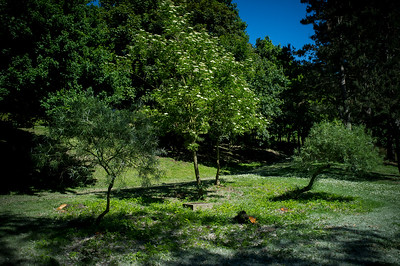 "France, La Courneuve :  walk at the ""parc départemental Georges-Valbon"" , on May 26 th , 2017, in La Courneuve, France - Photo Christophe Bricot"