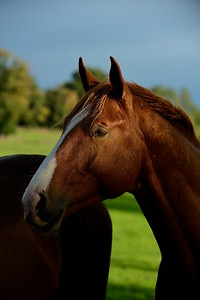 France, Brullemail, photo shooting yongs horses - Haras de Brullemail - Photo Christophe Bricot