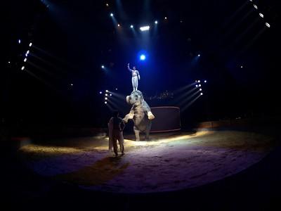 France, Bois de Boulogne : Silvia , nouveau spectacle au Cirque National Alexis Gruss - 40eme création - hommage à Silvia Monfort  - SYNDHA RETROUVE LA FORET : SYNDHA (L'ELEPHANTE), FRANCE MAISONNEUVE ET FIRMIN GRUSS - Photo Christophe Bricot