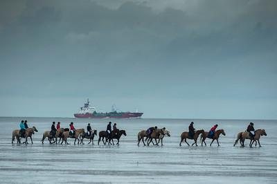 COURSES :  ILLUSTRATION PONEYS AVEC EN ARRIÈRE-PLAN LES BATEAUX, PÉTROLIERS... COURSES SUR LA PLAGE DE CUXHANEN/DUHNER - 18/08/13 - PHOTO CHRISTOPHE BRICOT -  DUHNEN Mudflat Courses à Cuxhaven Le parc national de la mer des Wadden de Hambourg n'est pas seulement un site du patrimoine mondial de l'UNESCO, mais il est aussi le lieu pour ce qui doit sûrement être l'une des courses de chevaux les plus étranges du monde: les Duhnen Mudflat Courses près de Cuxhaven. Dans le contexte dramatique de l'estuaire de l'Elbe, une voie de navigation internationale, les chevaux et leurs jockeys participer à des courses à travers les vasières détenus à marée basse. Les visiteurs peuvent observer ce spectacle remarquable se dérouler à partir de la digue à proximité.