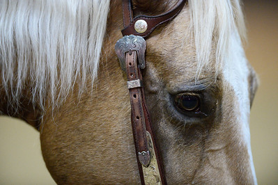France, Chassieu : Western horses   during Equita Lyon, on October 29th , 2016, in Chassieu, France - Photo Christophe Bricot