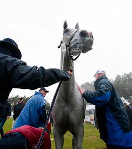 EVENTING - CONCOURS COMPLET CCI3* : KILRONAN, cheval de PAUL TAPNER à l'arrivée pendant le controle vétérinaire. On rafraichit le cheval avec de l'eau froide - CIC2* ET CCI3* DE SAUMUR 2012 - PHOTO : © CHRISTOPHE BRICOT