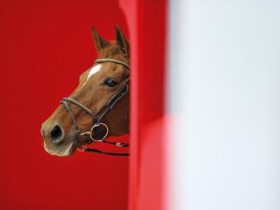 XXXXXXX  EQUITA LYON Jumping, Dressage, Polo et salon du cheval CSI*****- CDI*****  © Christophe Bricot