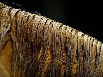 Cht. du Monde du Cheval Arabe 2009 Salon du cheval 2009 Paris-Nord Villepinte - Parc des expositions © Christophe Bricot