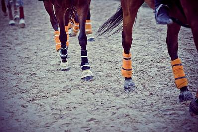 HORSEBALL : ILLUSTRATION, JAMBES ET PROTECTIONS, CLOCHES, BANDES DE POLO - CHAMPIONNATS DE FRANCE HORSE BALL 2013 - HARAS DE JARDY, MARNE LA COQUETTE, France. (Photo Christophe Bricot)