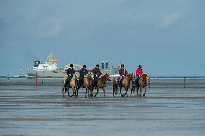 COURSES :  PONEYS ET BATEAU EN ARRIERE-PLAN - COURSES SUR LA PLAGE DE CUXHANEN/DUHNER - 18/08/13 - PHOTO CHRISTOPHE BRICOT -  DUHNEN Mudflat Courses à Cuxhaven Le parc national de la mer des Wadden de Hambourg n'est pas seulement un site du patrimoine mondial de l'UNESCO, mais il est aussi le lieu pour ce qui doit sûrement être l'une des courses de chevaux les plus étranges du monde: les Duhnen Mudflat Courses près de Cuxhaven. Dans le contexte dramatique de l'estuaire de l'Elbe, une voie de navigation internationale, les chevaux et leurs jockeys participer à des courses à travers les vasières détenus à marée basse. Les visiteurs peuvent observer ce spectacle remarquable se dérouler à partir de la digue à proximité.