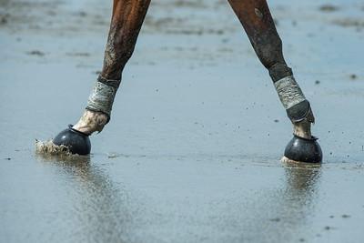 COURSES :  pieds, sabots, sable COURSES SUR LA PLAGE DE CUXHANEN/DUHNER - 18/08/13 - PHOTO CHRISTOPHE BRICOT -  DUHNEN Mudflat Courses à Cuxhaven Le parc national de la mer des Wadden de Hambourg n'est pas seulement un site du patrimoine mondial de l'UNESCO, mais il est aussi le lieu pour ce qui doit sûrement être l'une des courses de chevaux les plus étranges du monde: les Duhnen Mudflat Courses près de Cuxhaven. Dans le contexte dramatique de l'estuaire de l'Elbe, une voie de navigation internationale, les chevaux et leurs jockeys participer à des courses à travers les vasières détenus à marée basse. Les visiteurs peuvent observer ce spectacle remarquable se dérouler à partir de la digue à proximité.