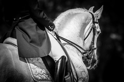 France, Compiègne :  Olga Baksheeva (russian Federation) riding Ultra   during the Grand Prix Barriquand, CDI3*, Dressage competition of the FEI CDIO5* of Compiègne on May 19th , 2016, in Compiègne, France - Photo Christophe Bricot