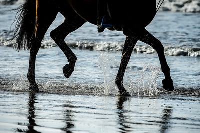 France, La Baule :  illustration, horses on the beach during the FEI Longines International Jumping of La Baule , on May {day th , {year4}, in La Baule, France - Photo Christophe Bricot