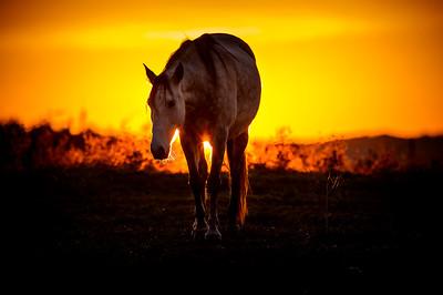 Portugal, Herdade do Pessegueiro : Horses shooting in Porto Covo, Setubal, Portugal, on January 21 rst , 2017, in Herdade do Pessegueiro, Portugal - Photo Christophe Bricot
