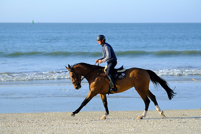 Mathieu BILLOT (FRA) riding VENT DU SUD KERGLENN