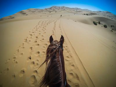 """Dunes of Merzouga, Morocco : second step of The """"Gallops of Morocco"""". Gallops of Morocco is an equestrian raid in the Moroccan desert (Drâa-Tafilalet region) through the high dunes of Merzouga, on January 9, 2012, in Dunes of Merzouga, Morocco - Photo Christophe Bricot  Les «Gallops of Morocco» est un raid équestre dans le désert marocain, (région du Drâa-Tafilalet) à travers les hautes dunes de Merzouga. Après quelques nuits dans le désert, l'aventure s'achèvera au Kasbah hôtel XALUCA aux portes du désert. Une aventure humaine, insolite autour du cheval barbe et arabe-barbe dans le désert magique de Merzouga, du 25 février au 4 mars 2018. © Christophe Bricot"""