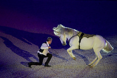 """{country}, {city} : show """"Nuit ibérique"""", Iberian night show with Royal Andalusian School of Equestrian Art, Cadre Noir of Saumur, Portuguese School of Equestrian Art and Christophe Hasta Luego, during the Jumping International in Bordeaux, western France, on February 7th , 2019, in {city}, {country} - Photo Christophe Bricot"""
