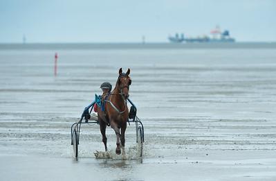 COURSES :  SUR FOND DE BATEAU, DIRK JAN HOF  SUR AMAZING BOY- COURSES SUR LA PLAGE DE CUXHANEN/DUHNER - 18/08/13 - PHOTO CHRISTOPHE BRICOT -  DUHNEN Mudflat Courses à Cuxhaven Le parc national de la mer des Wadden de Hambourg n'est pas seulement un site du patrimoine mondial de l'UNESCO, mais il est aussi le lieu pour ce qui doit sûrement être l'une des courses de chevaux les plus étranges du monde: les Duhnen Mudflat Courses près de Cuxhaven. Dans le contexte dramatique de l'estuaire de l'Elbe, une voie de navigation internationale, les chevaux et leurs jockeys participer à des courses à travers les vasières détenus à marée basse. Les visiteurs peuvent observer ce spectacle remarquable se dérouler à partir de la digue à proximité.