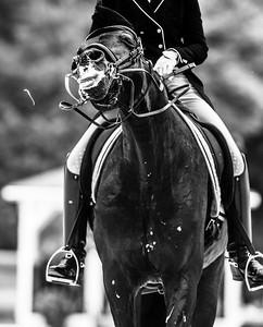 France, Compiègne :  Sophie Van Lent – Baetens (Belgium) riding Captain Jack  during the Prix Arc of the CDI2* Dressage competition of the FEI CDIO5*, Compiègne on May 20th , 2016, in Compiègne, France - Photo Christophe Bricot