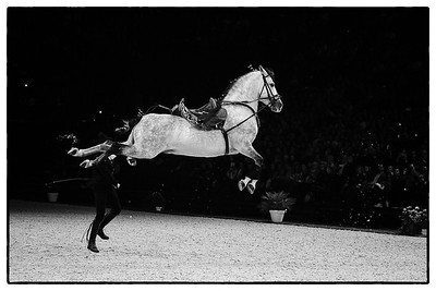 France, Paris : The Royal Andalusian School of Equestrian Art at the Accor Hotels Arena, Bercy, on  October 8th , 2016, in Paris, France - Photo Christophe Bricot / Dppi