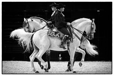 France, Paris : The Royal Andalusian School of Equestrian Art at the Accor Hotels Arena, Bercy, on  October 8th , 2016, in Paris, France - Photo Christophe Bricot