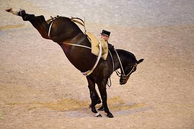 SPECTACLE : LES 4 ECOLES D'ART EQUESTRE - VIENNE, SAUMUR, JEREZ ET LISBONNE  - © CHRISTOPHE BRICOT -  SPECTACLE : LES 4 ECOLES D'ART EQUESTRE - VIENNE, SAUMUR, JEREZ ET LISBONNE  - © CHRISTOPHE BRICOT -  - l'Ecole Espagnole d'Equitation de Vienne, - le Cadre Noir de Saumur,  - l'Ecole Royale Andalouse d'Art Equestre et  - l'Ecole Portugaise d'Art Equestre  Ces 3 représentations exceptionnelles réuniront 45 écuyers, menés par les 4 Ecuyers en Chef, 80 chevaux issus de chaque école (les Lipizzans, les Anglos Arabes, les Pures Races Espagnoles et les Lusitaniens Alter Real), des chevaux en liberté des Haras Nationaux, dans un cadre créé spécialement pour ces trois représentations.  Ces 3 représentations exceptionnelles réuniront 45 écuyers, menés par les 4 Ecuyers en Chef, 80 chevaux issus de chaque école (les Lipizzans, les Anglos Arabes, les Pures Races Espagnoles et les Lusitaniens Alter Real), des chevaux en liberté des Haras Nationaux, dans un cadre créé spécialement pour ces trois représentations.