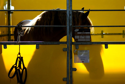 France, Bordeaux : ambiance in the stables during the International Show Jumping of Bordeaux, on February 1, 2018, in Bordeaux, France - Photo Christophe Bricot