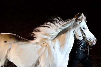 """Alexis Gruss pendant le spectacle """"les étalons d'Alexis"""", création pour La nuit du cheval du Salon du Cheval 2015,"""
