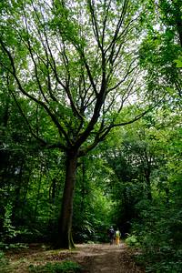 de la Forêt domaniale de Marly. La forêt de Marly, qui fut appelée « forêt de Cruye » jusqu'au XVIIIe siècle, est une forêt domaniale de 2 000 hectares située dans les Yvelines à vingt kilomètres environ à l'ouest de Paris, entre Saint-Germain-en-Laye et Versailles. Elle s'étend sur une longueur d'environ 12 kilomètres d'est en ouest sur les communes de Louveciennes, Marly-le-Roi, Saint-Nom-la-Bretèche, Feucherolles; elle communique avec la forêt de Saint-Germain-en-Laye par la Plaine de la Jonction à Chambourcy. Balade photographique.