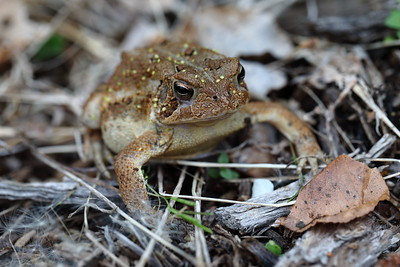 Toad in Flower Bed