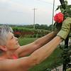 9c. Gardening!