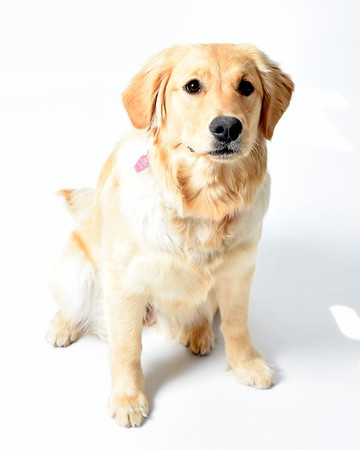 Piper - 8 months