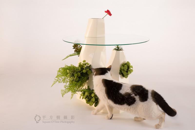 """◢平方樹攝影粉絲專頁   <a href=""""https://www.facebook.com/square.o.tree"""">https://www.facebook.com/square.o.tree</a>"""