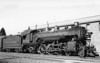 3105 Class P-11, right side, (NWP Train #1), Santa Rosa CA, 6/24/39  <br /> (D. S. Richter)