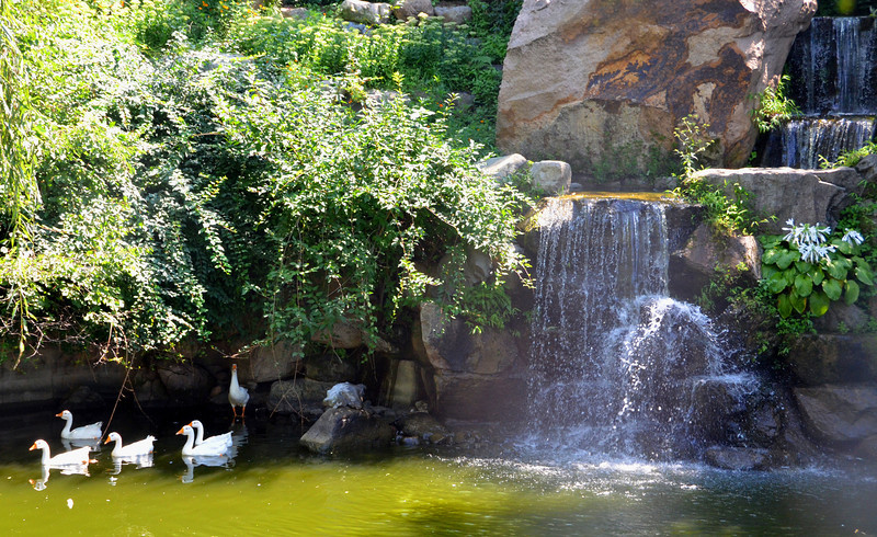 Geese and waterfall in the Mutianyu Garden, near the Great Wall of China