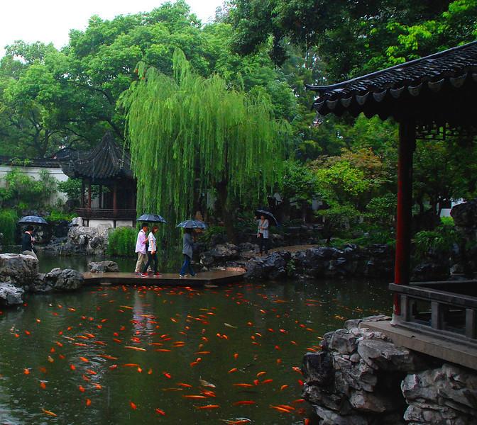 Goldfish in Shanghai's Yuyuan Garden of 1559 Ming Dynasty 1