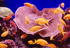 Colorful marine life on display at the Underwater Observatory Marine Park in Eilat, Israel.