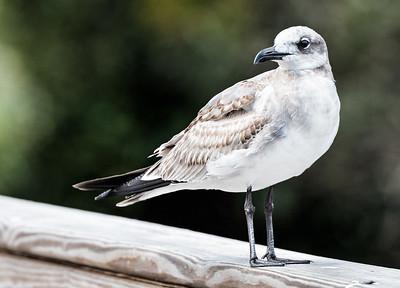 roslyn duck pond