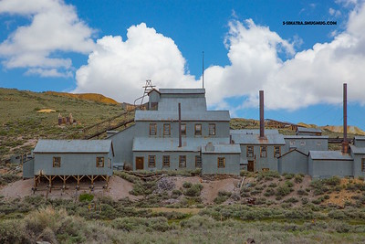 Bodie stamp plant