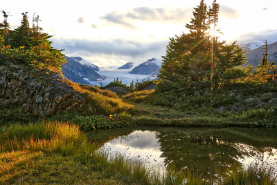 Salmon Glacier & Alpine meadow